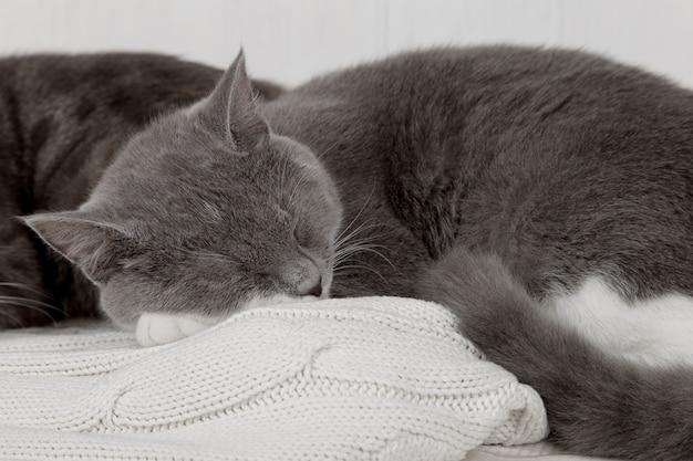 Deux chats gris dorment ensemble, s'étreignent et prennent soin. faites preuve de tendresse, allongez-vous sur un pull en tricot blanc doux.