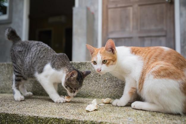 Deux, chats, manger, par terre