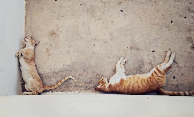 Deux chats sans-abri aux cheveux rouges dormant à l'ombre de la maison