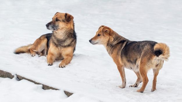Deux chiens bruns en hiver dans la neige