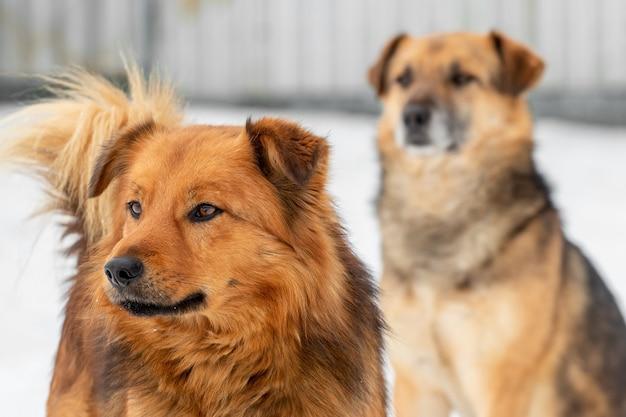 Deux chiens bruns se bouchent en hiver à l'extérieur
