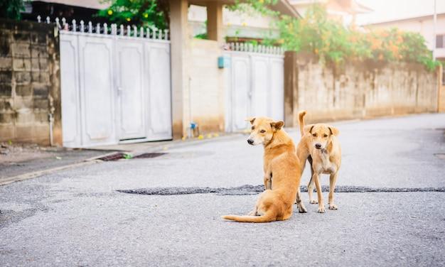 Deux chiens debout sur la route