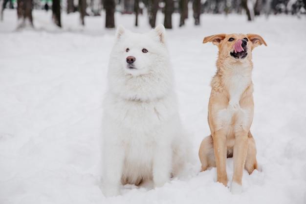 Deux chiens drôles assis sur la neige dans la forêt