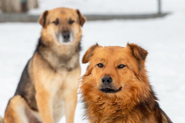 Deux chiens en hiver à l'extérieur sur fond de neige blanche