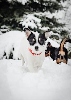Deux, chiens jouant