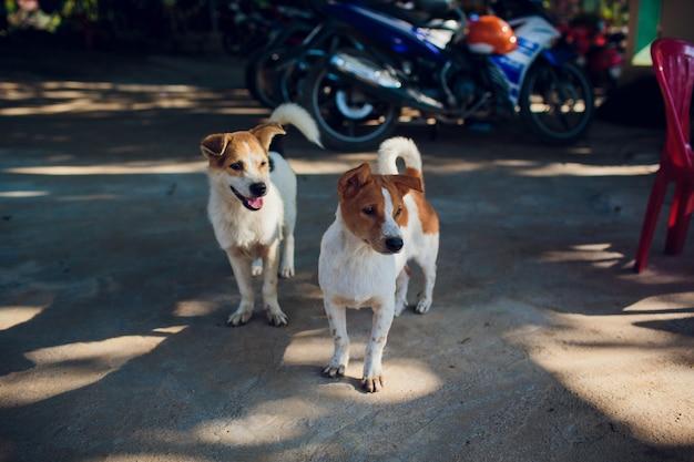 Deux chiots assis dans la rue et regarder droit