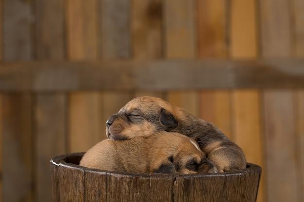Deux chiots nouveau-nés dans un panier