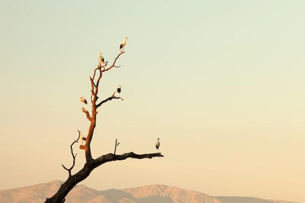 Deux cigognes perchées sur un arbre
