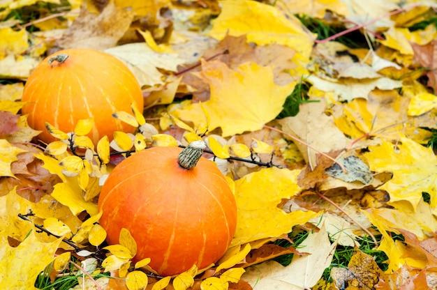 Deux citrouilles sur fond d'automne dans la nature.