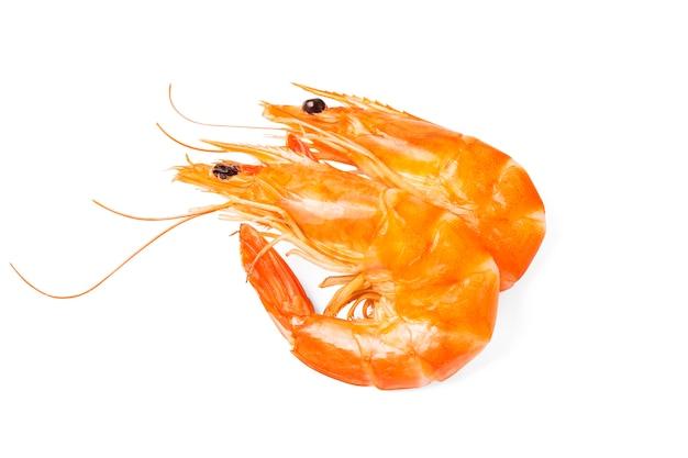 Deux crevettes sur fond blanc