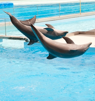 Deux dauphins