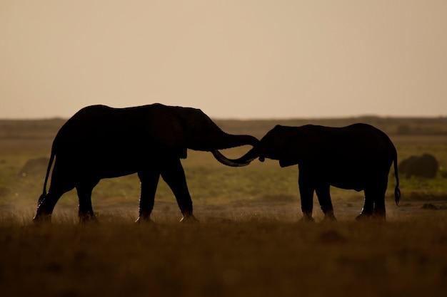 Deux éléphants vus en contre-jour