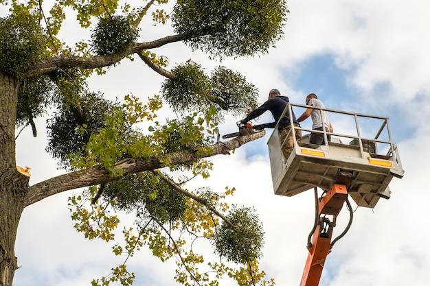 Deux employés de service masculins coupant de grosses branches d'arbres avec une tronçonneuse depuis la plate-forme du télésiège haute.