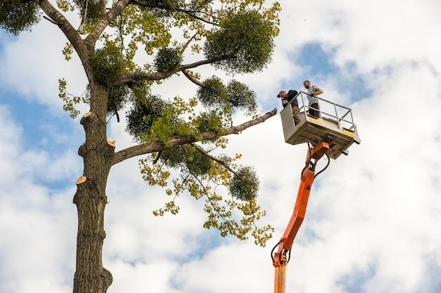 Deux employés de service masculins coupant de grosses branches d'arbres avec une tronçonneuse à partir de la plate-forme de télésiège haute.