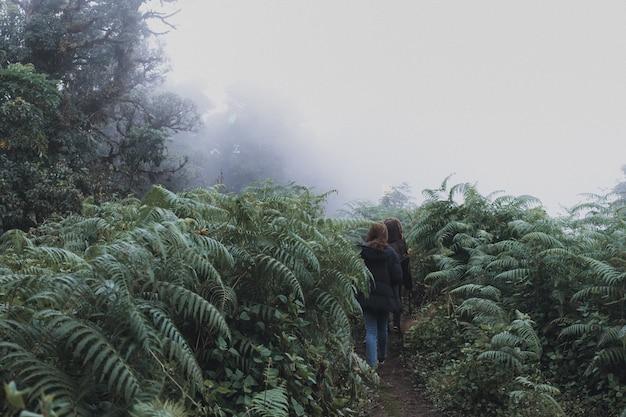 Deux femmes trekking dans la jungle des bois de la forêt tropicale