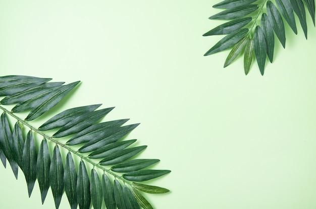 Deux feuilles de palmier sur fond vert. notion d'été. vue de dessus