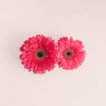 Deux fleurs de gerbera rose sur une table lumineuse