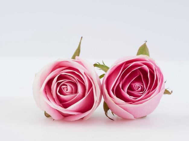 Deux fleurs roses roses
