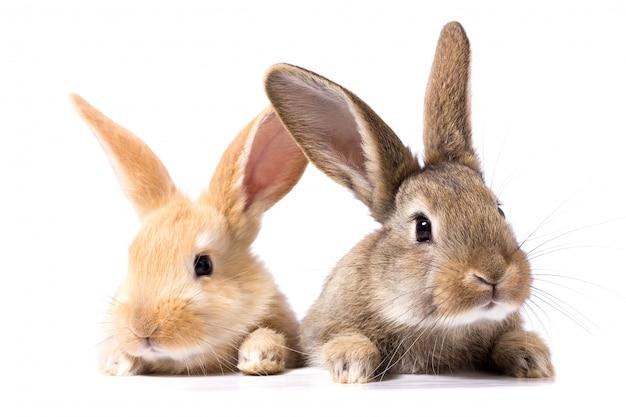 Deux lapins moelleux regardent l'enseigne