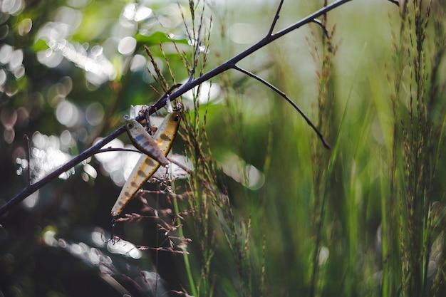 Deux leurres de pêche suspendus sur une tige de plante