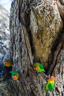 Deux loriquets près du nid. tanzanie, afrique