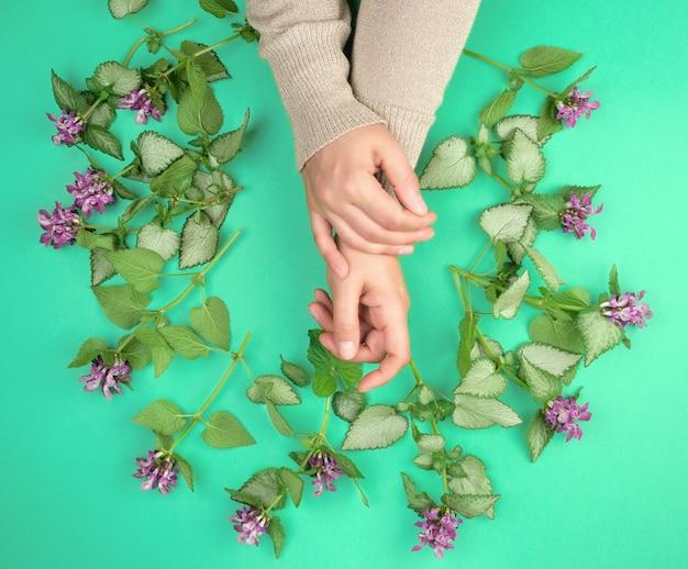 Deux mains féminines et petites fleurs roses