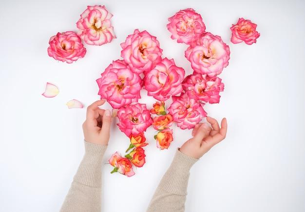 Deux mains d'une jeune fille à la peau lisse et aux pétales de rose rose
