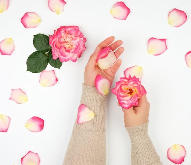 Deux mains d'une jeune fille à la peau lisse et aux pétales de roses