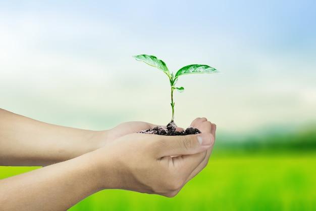 Deux mains tenant un arbre