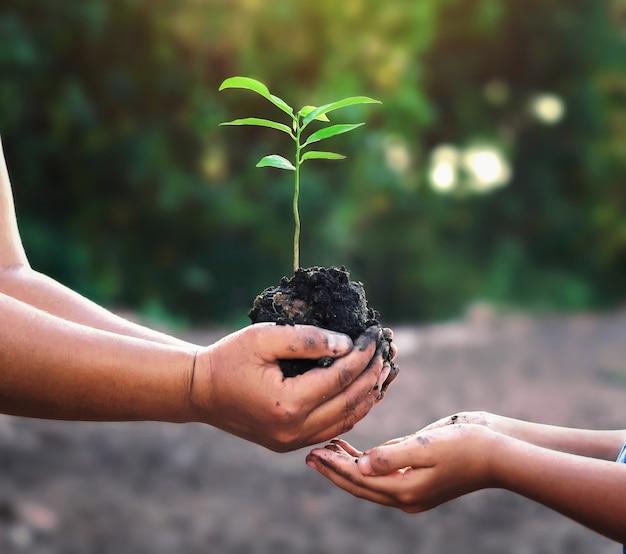 Deux mains tenant un petit arbre pour la plantation. monde vert concept