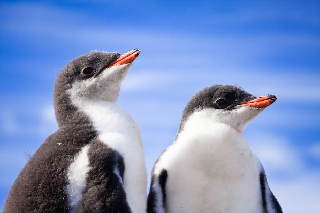 Deux manchots en antarctique