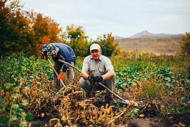 Deux membres en train de creuser des pommes de terre dans le jardin.