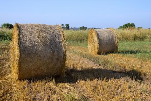 Deux meules de foin dans le magnifique paysage du matin d'été des pouilles