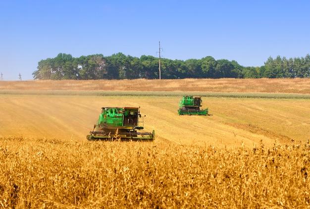 Deux moissonneuses-batteuses travaillant sur un champ de blé