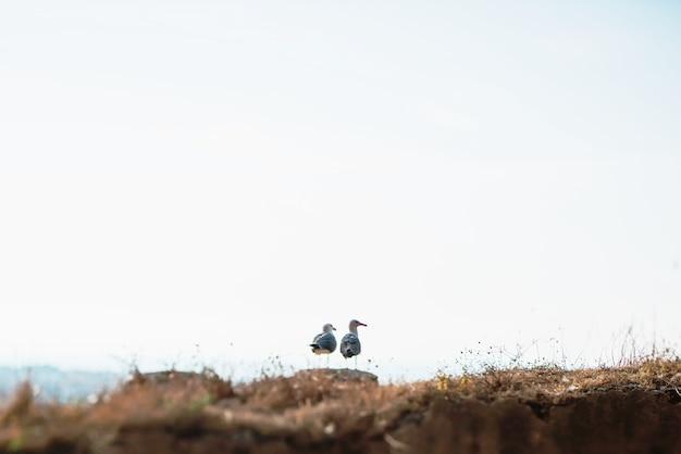 Deux mouettes sur le rocher