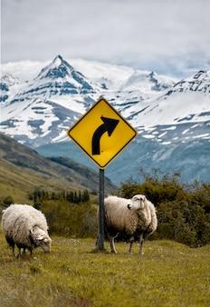 Deux moutons près d'un panneau jaune avec de hautes montagnes enneigées