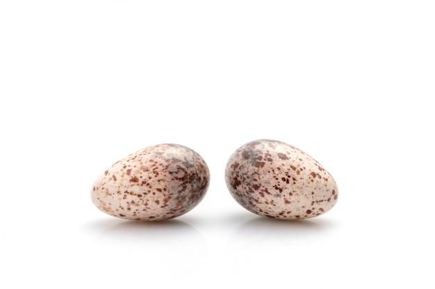 Deux œufs d'oiseaux colombe sur blanc