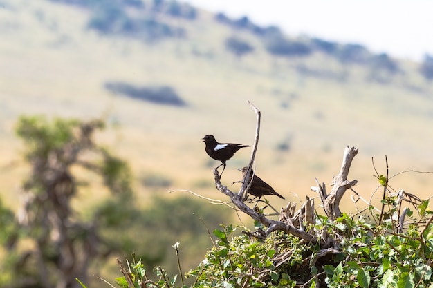 Deux oiseaux sur la branche en mousseline de soie chat sur l'arbre