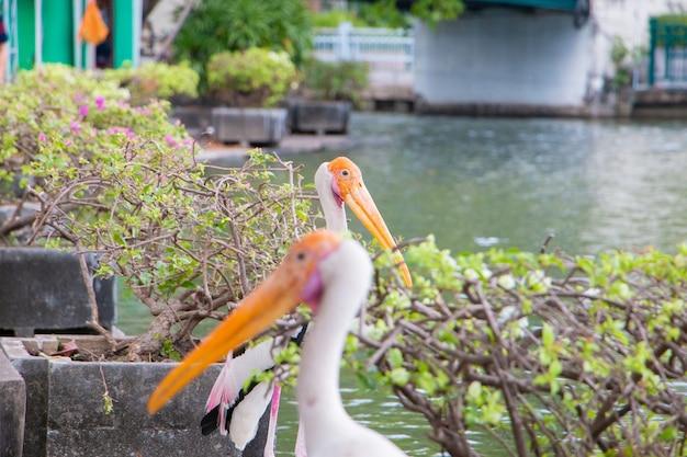 Deux Oiseaux Cigognes Peintes Debout Près De La Rivière Photo Premium