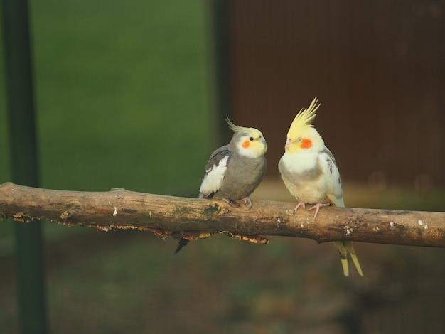 Deux oiseaux dans une branche