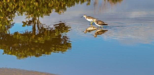 Deux oiseaux se reflètent dans l'eau