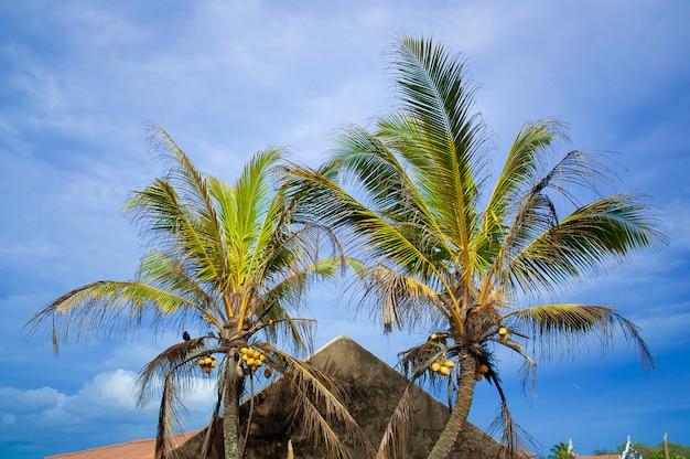Deux palmiers contre le ciel. tourisme