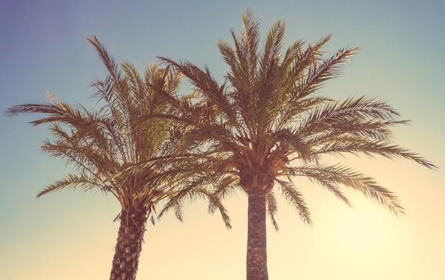 Deux palmiers dans un coucher de soleil d'été sur un fond de ciel. édition de tons doux et chauds.