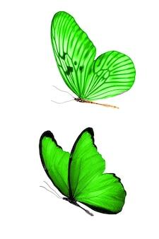 Deux papillons verts volants isolés sur fond blanc. insectes tropicaux. photo de haute qualité