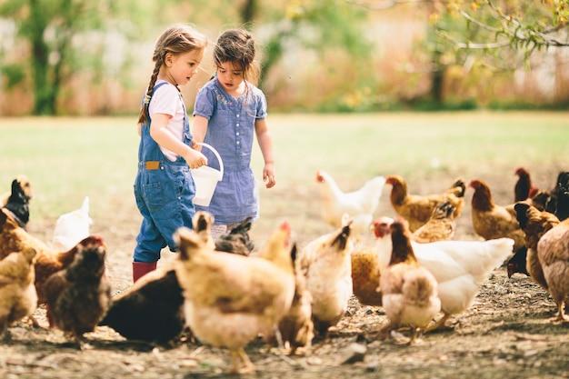 Deux petites filles qui nourrissent des poulets