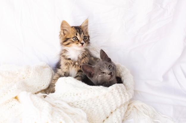 Deux petits chatons sur une écharpe tricotée blanche.