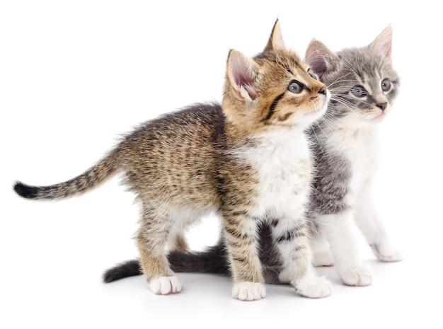 Deux petits chatons isolés
