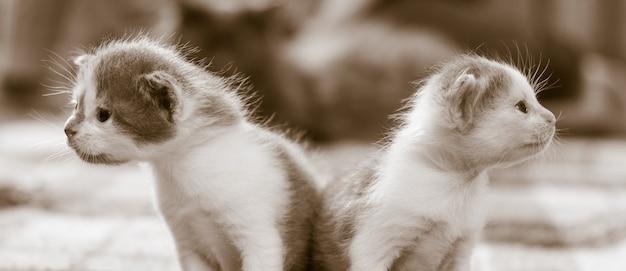 Deux petits chatons mignons à la recherche dans des directions différentes