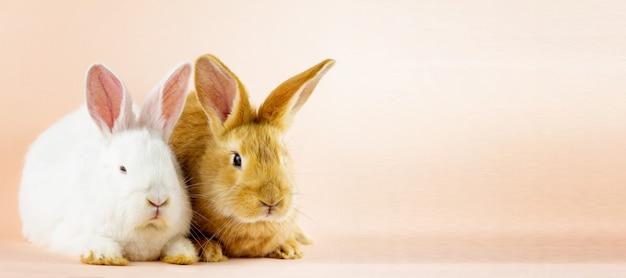 Deux petits lapins moelleux sur un mur rose pastel.