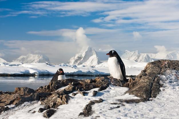 Deux pingouins rêvant